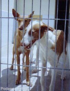 perrera-ibiza-3