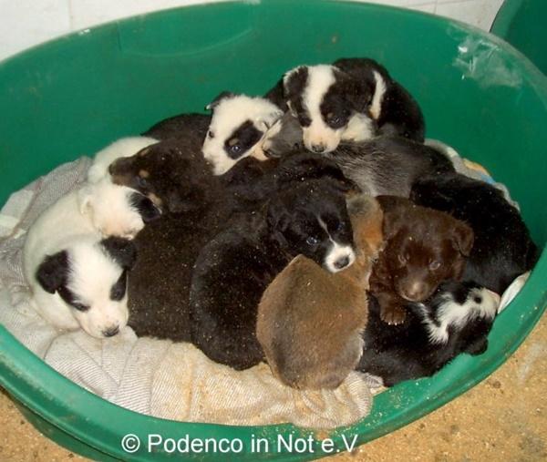 Tierheimalltag - ungewollt und ausgesetzt